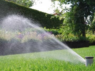 Création de votre pelouse : du déroulement du gazon en plaques à l'irrigation